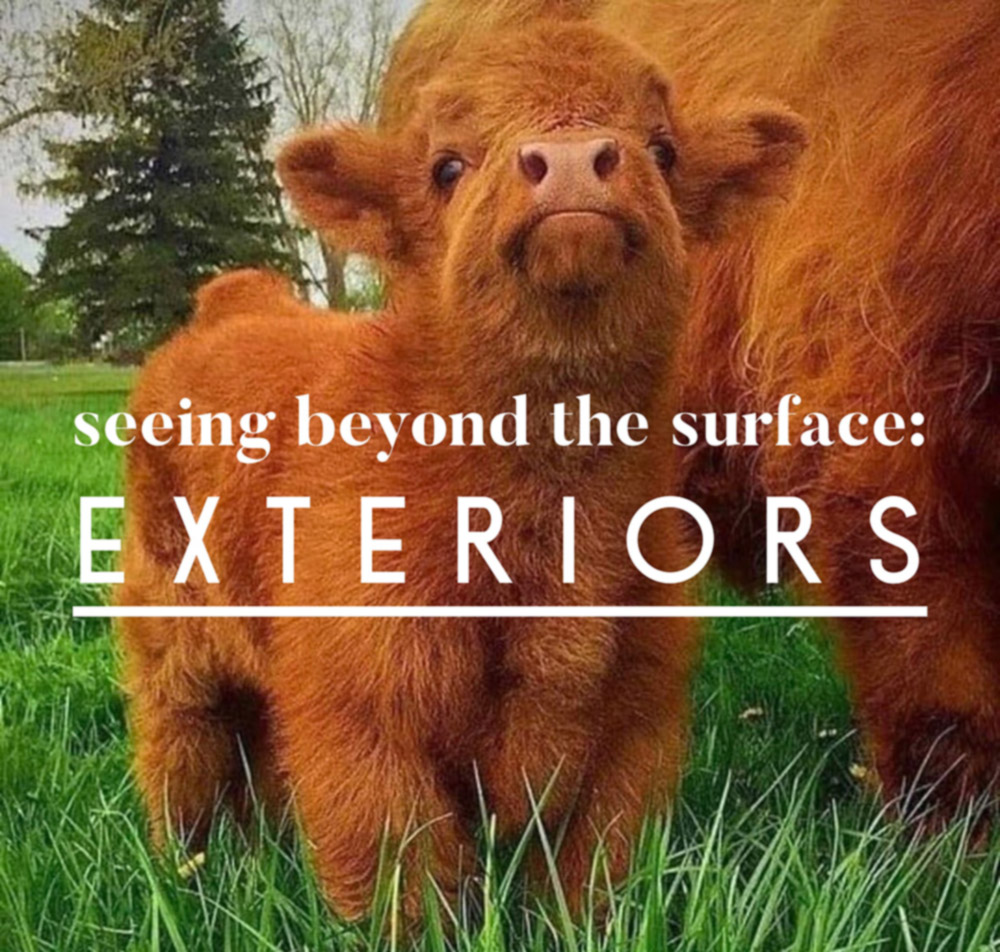 Seeing Beyond the Surface Part 2: Exteriors